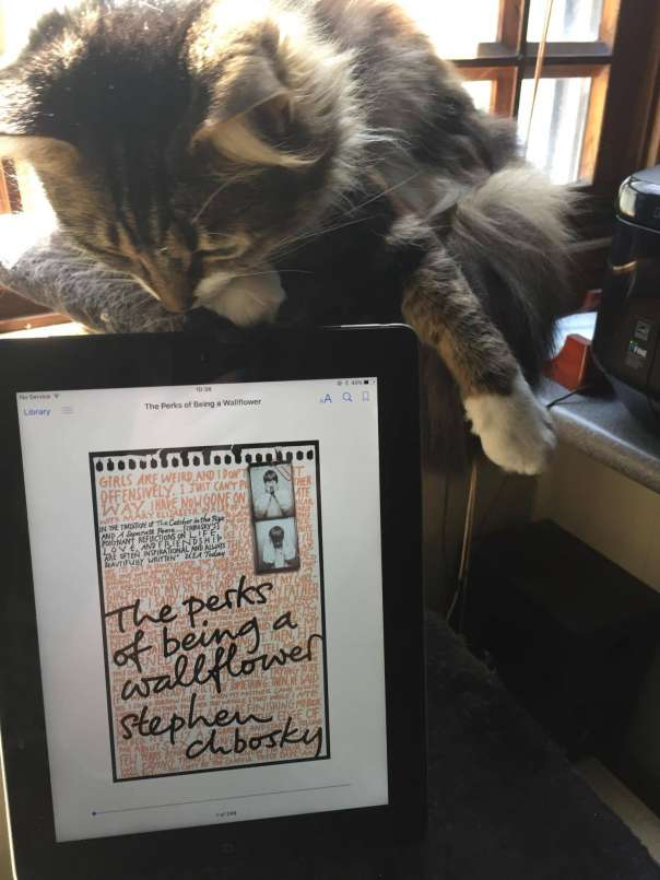 A cat reads Perks of Being a Wallflower on an ipad